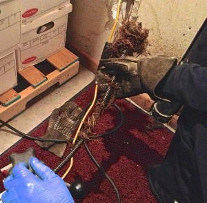 Drain Cleaning Federal Heights